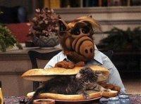 Не ешь кота, Альф!