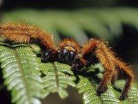 Ядовитые пауки атакуют!