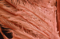 Terra Cibus: хвост креветки