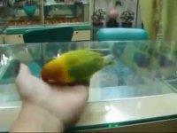Не показывайте попугаям порнуху!