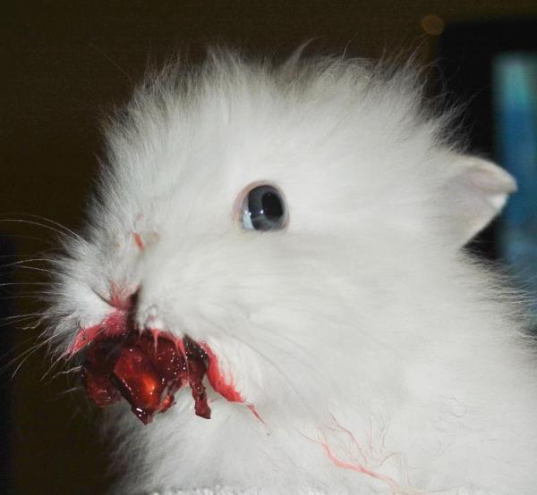 Что случилось с кроликом?