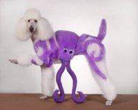 Креативная стрижка собаки: осьминог