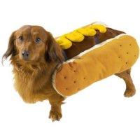 Хотдог: немного горчицы и кетчупа для собачки