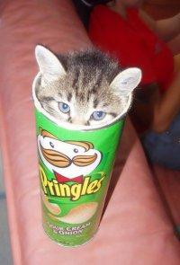 Pringles с ароматом котят