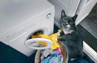 Идеальный кот умеет стирать