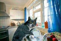 Идеальный кот моет посуду