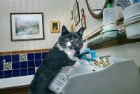 Идеальный кот моет раковину