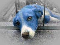 Книги, прочитанные летом: Габриэль Гарсиа Маркес «Глаза голубой собаки»