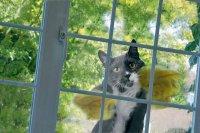 Идеальный кот моет окно