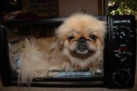 Лежанки для животных: вторя жизнь микроволновки