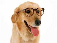 Собаки лучше людей!
