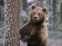 Медведь украл семечки