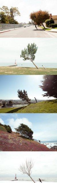 Деревья и люди