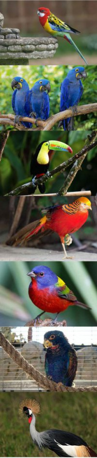 the_most_beautiful_birds