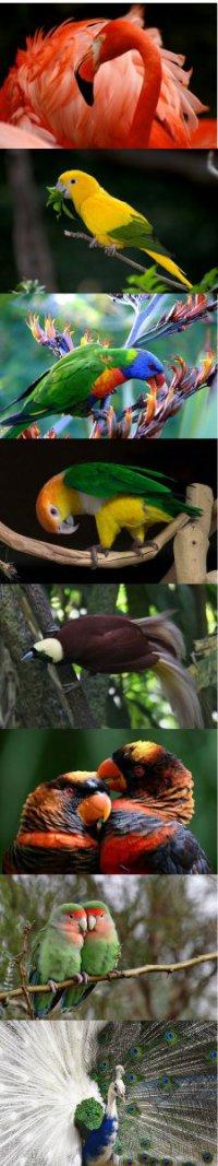 Самые красивые птицы. Часть 2