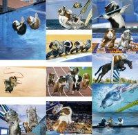Календарь с морскими свинками к Олимпиаде 2012