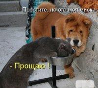 Всепрощающий кот