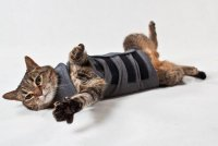 Жилет Thundershirt для кошки
