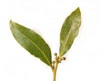 Специи и пряности: лавровый лист в кулинарии