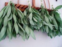 Специи и пряности: шалфей в кулинарии