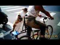 Кошка-велосипедистка