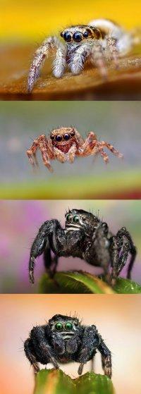 Замечательная подборка фотографий пауков