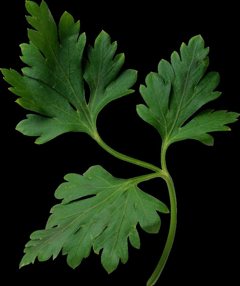 Специи и пряности:  петрушка в кулинарии
