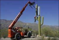 Вышки мобильных операторов в кактусах