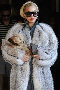 Леди Гага ответила на нападки PETA