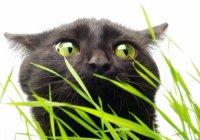 Слух кошки