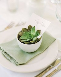 Сревировка свадебного стола: суккуленты с именными карточками