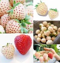 Белая клубника Pineberry