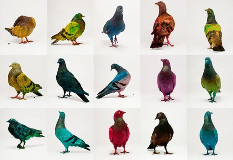 Голуби тоже птицы