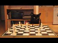 Могут ли коты с пятью пальцами...?