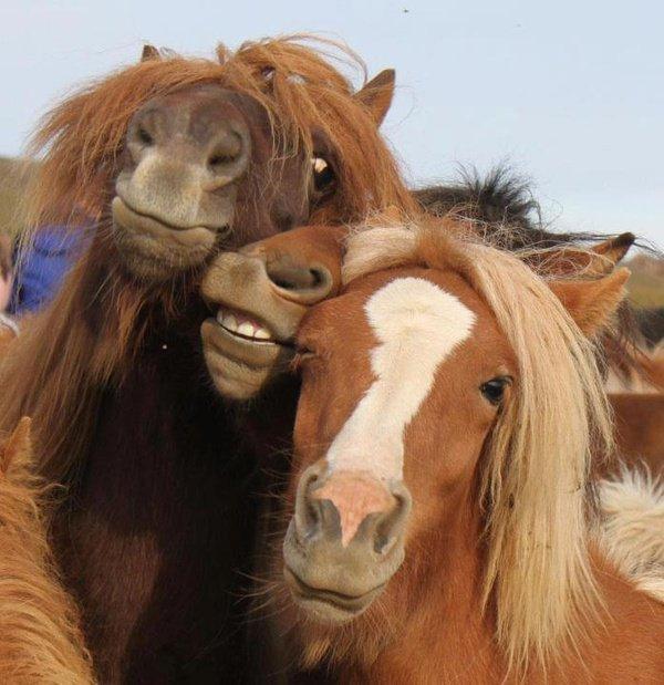 Улыбающиеся лошади