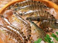 Как в пищевой промышленности подделывают продукты: креветки