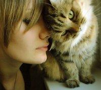 Кошачьи повадки: трение о ноги