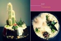 Сухой флорариум для кактусов