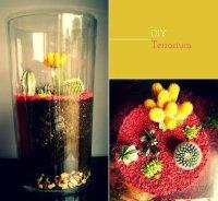 Влажный флорариум для кактусов