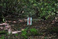 Самые жуткие места на планете: лес Аокигахара