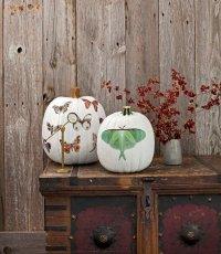 Идеи для дома на Хэллоуин: тыквы с бабочками