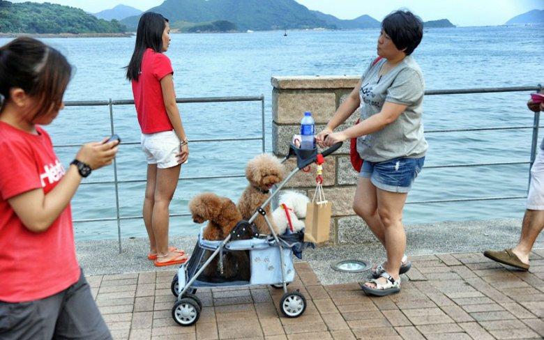 Счастливые собачки Гонконга