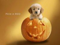 Конкурсы на Хэллоуин: буриме