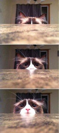 Как котэ смотрит страшные фильмы