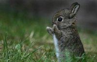 Просто милый зайчонок
