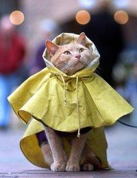 Дождевик для кота?