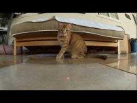 Вирусная реклама экшн-камеры GoPro: коты против лазера