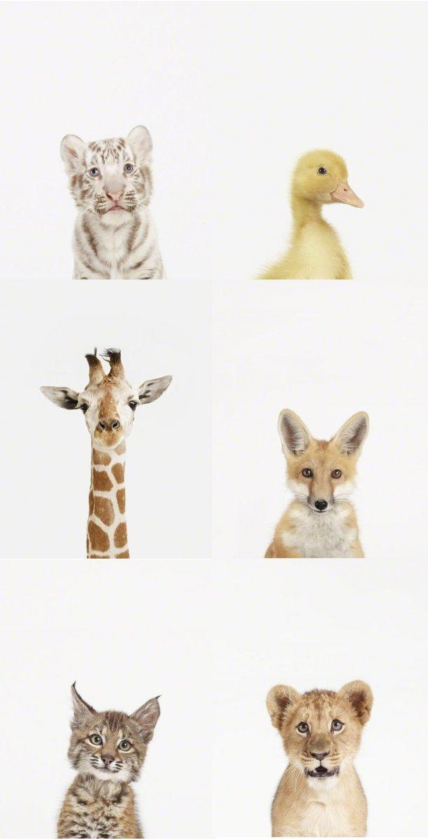 Портреты детенышей животных