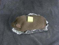 Самые глупые поделки: жаркое из морской свинки