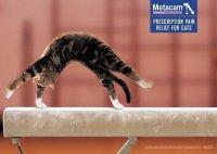 Реклама обезболивающих таблеток для котов